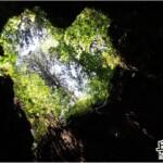 療癒之美 – 屋久島