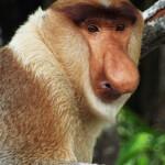 Weston Monkey